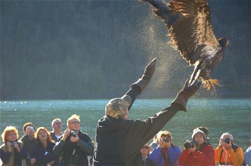 eagle-release-ii